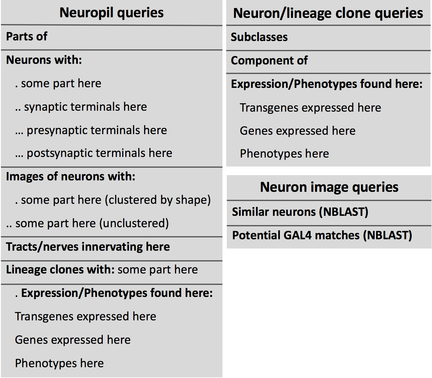Query menus for neuropil domain and neuron
